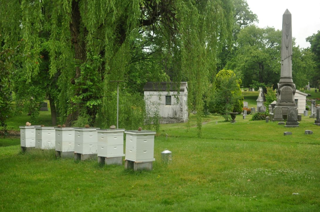 green-wood cemetery beehives