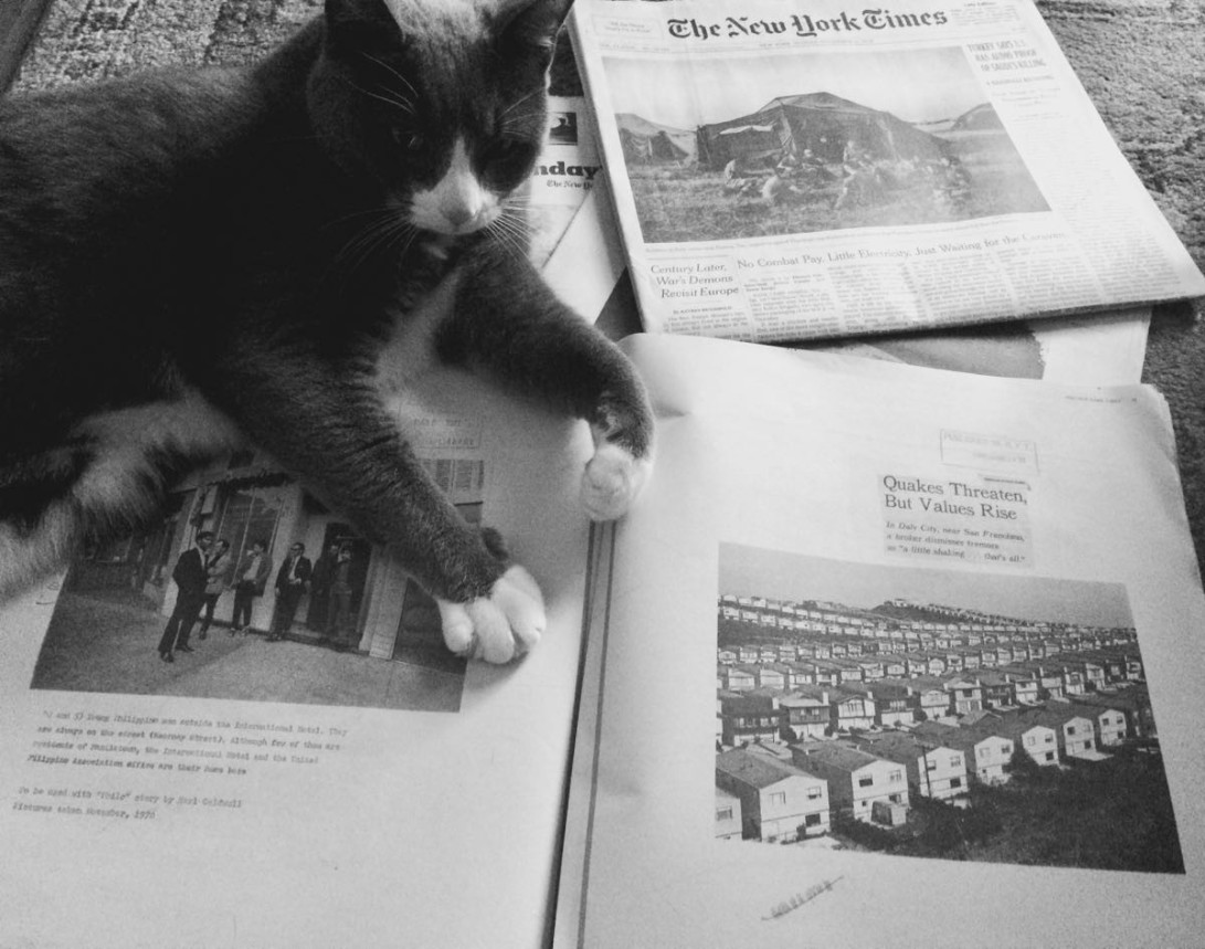 Cat sitting on a newspaper